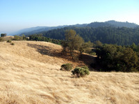 Highlight for Album: Foothill Park / Los Trancos Hike