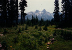Mt Rainier Moraine Trail, 1996