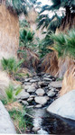 Highlight for Album: Palm Canyon, Anza Borrego